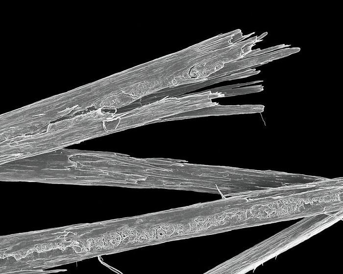 split hair microscope