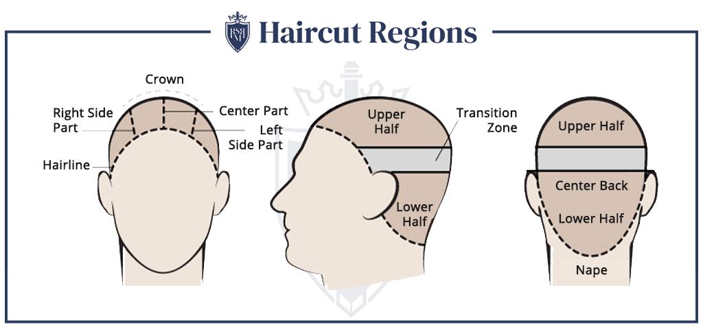 Infográfico - Regiões de corte de cabelo