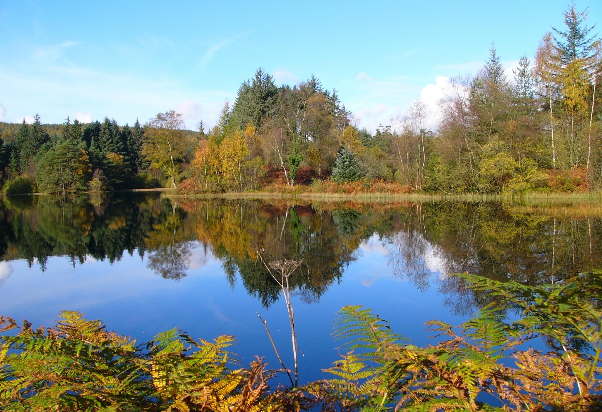 floresta escocesa